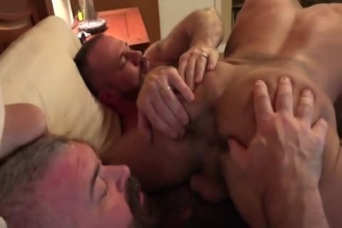 hairy Cub Needs Some bare Training From His Two Daddy Bears
