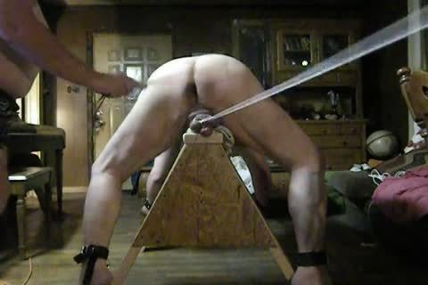 plump Daddy acquire fastened Up On His Sawhorse, Then Spanked And Balls Bashed.