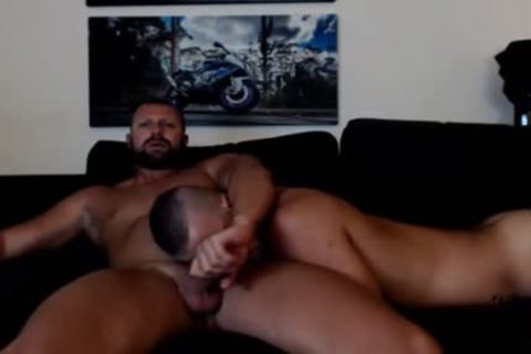 juvenile Bear Sucks A older Bears dick Live On Cruisingcams Com