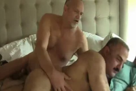 Two tasty Daddy Bears homo Sex